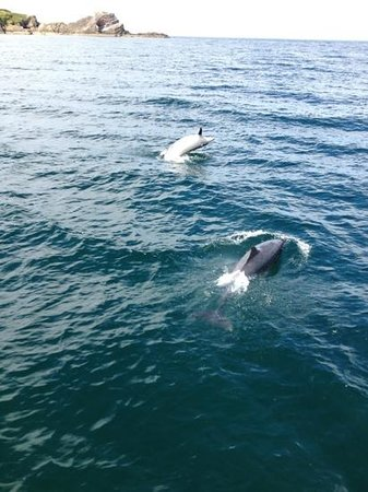 Gemini Marine Tours: 2 of the dolphins we saw
