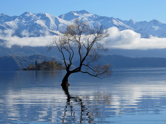 Harpers Bed and Breakfast: 'THE' tree in Lake Wanaka