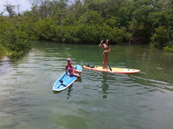 Sarasota Paddleboard Company: mangrove maze at LBK