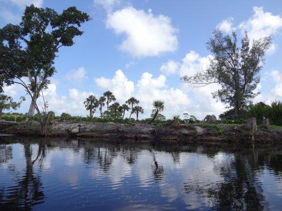 Conservancy of Southwest Florida : conservancy views