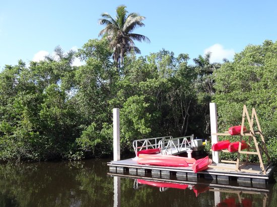 Conservancy of Southwest Florida : mangrove tour boat area