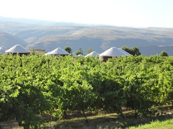Cave B Estate Winery: view of the yurts from the motorhome
