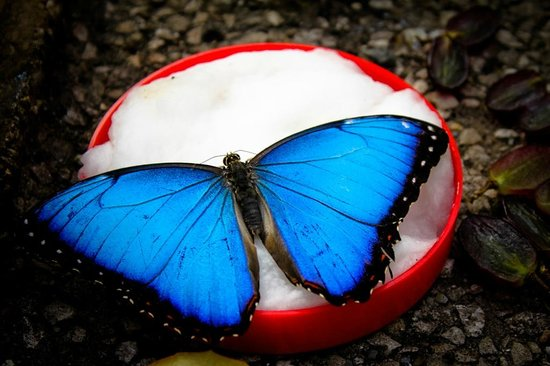 Pili Palas Nature World: Another butterfly