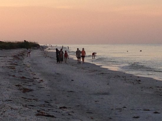 Sunset Beach Inn: People looking for shells, in the morning, in front of the hotel.