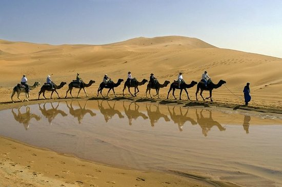 Dream of Morocco - Day Tours: camellos