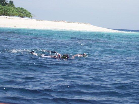 Gangga Island Resort & Spa: snorkeling