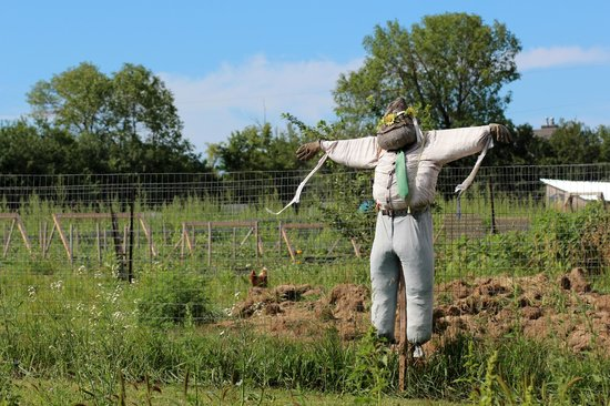 Thyme Again Gardens: scarecrow dude