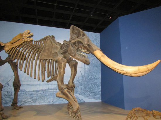 Illinois State Museum: Mastadon Exhibit