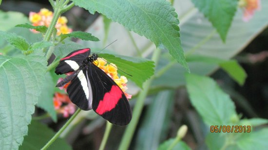 Victoria Butterfly Gardens: Beautfiul Bold colors on this one!