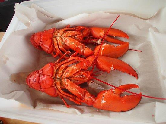 Ryer Lobsters: Two 1.5 lb lobsters