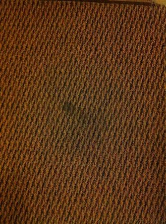 Americas Best Value Inn Brunswick: carpet stain