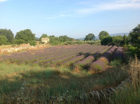 Au pied du Luberon : More space, more lavender, more of Mother Nature at her best