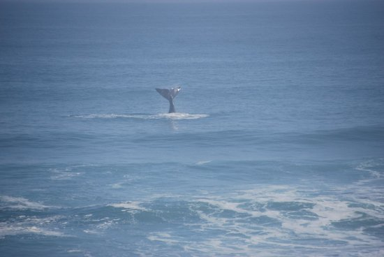 Daytrippers: A Shot of the Whale We Saw
