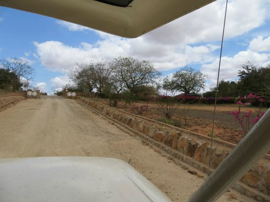 Voi Safari Lodge: Zufahrt zur Lodge