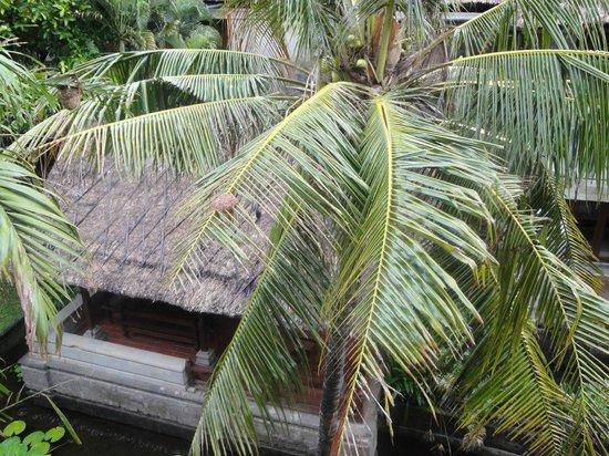 Grand Balisani Suites: вид из номера