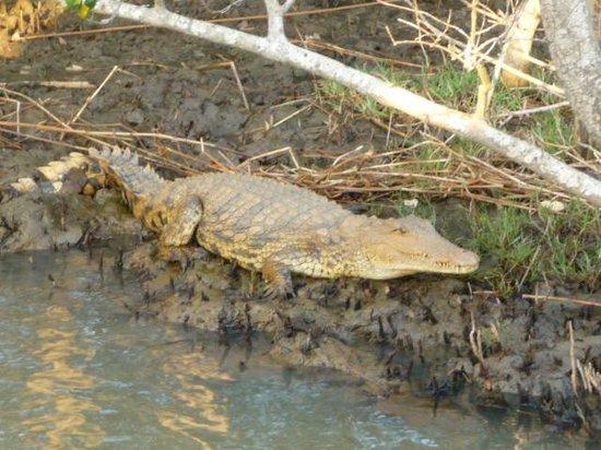 St Lucia Tours & Charters: Friendly Croc