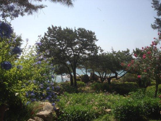B&B Giglio di Mare : Beautiful garden