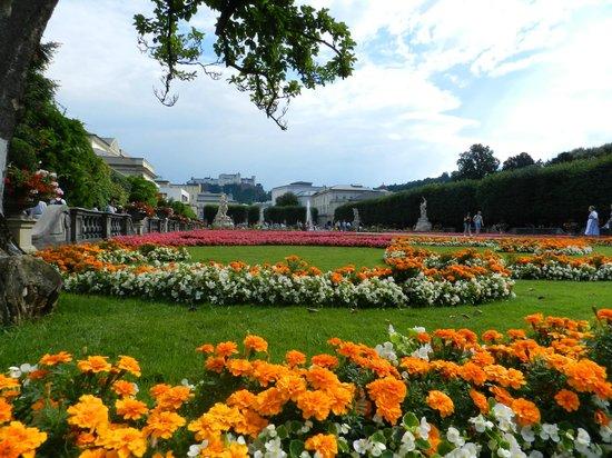 Fiori spendidi foto di palazzo e giardini di mirabell - Giardini e fiori ...