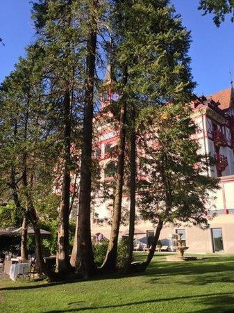 Hotel Vitznauerhof : Liegewise und eigener Seestrand