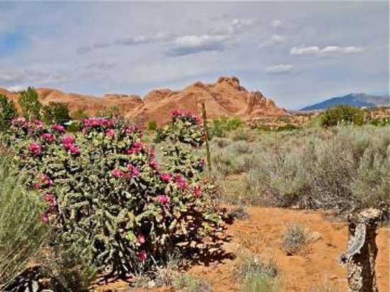 Desert Hills Bed and Breakfast: View from the room