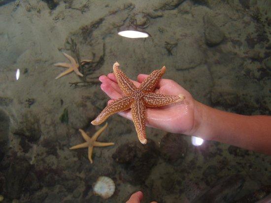 Exploris: Estrellita de mar