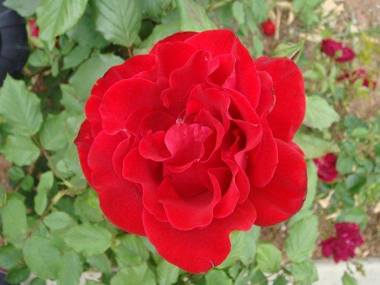 Rose Walk Inn: Dans le jardin