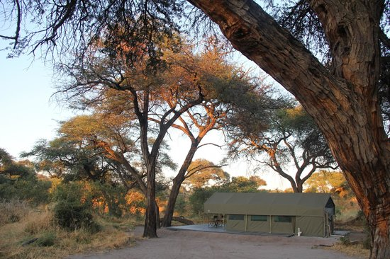 Mogotlho Safari Lodge: Brand new camp