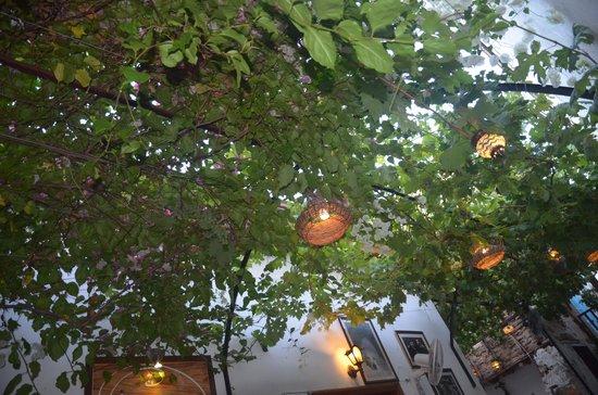 Hayta Meyhane Restaurant: The green canopy