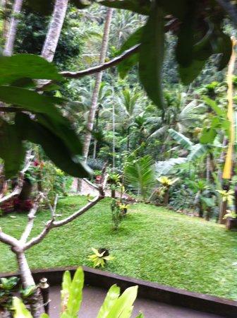Boni Bali Restaurant : paysage sublime