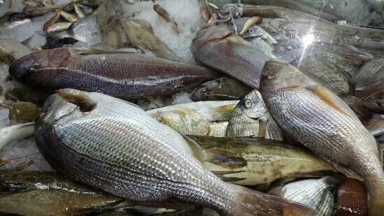 Saga Fish Restaurant : De beaux dentis (senagrida) dans la vitrine de Saga