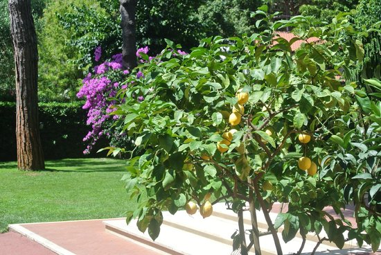 Hotel Andreaneri: les citrons