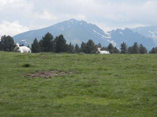 VVF Villages Les Cabannes : Plateau de Beille