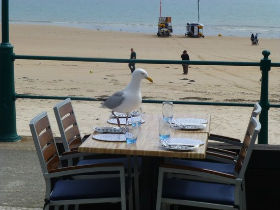 Oyster Box Beach Bar & Restaurant : An uninvited guest at the Oyster Box, St. Brelade's Bay