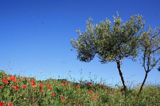 Alen d'Aragon: Alen d' Aragon landscape