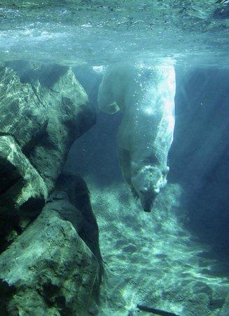 Seneca Park Zoo: Polar Bear