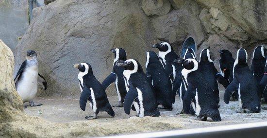 Seneca Park Zoo: Penguin