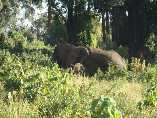 Ngorongoro Sopa Lodge: Da janela do quarto!! Lindos!