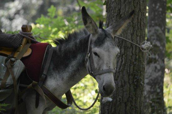 Le Monde d'Ossyane : Justine