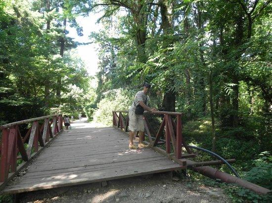 Conacul Archia: Parcul dendrologic Simeria