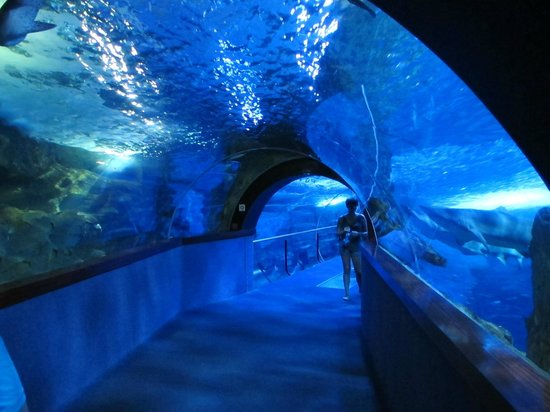 le tunnel picture of aquarium donostia san sebastian san sebastian donostia tripadvisor. Black Bedroom Furniture Sets. Home Design Ideas