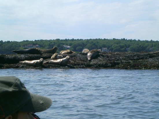 Harborfields : seals on a remote island