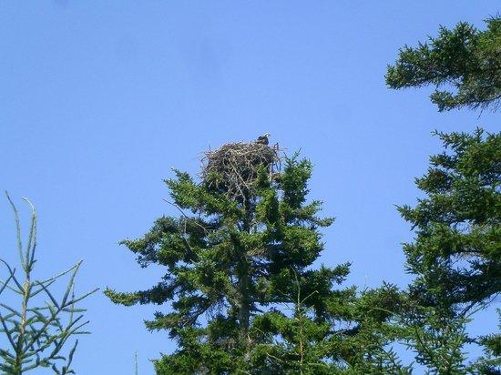 Harborfields : Bird nesting in a treetop