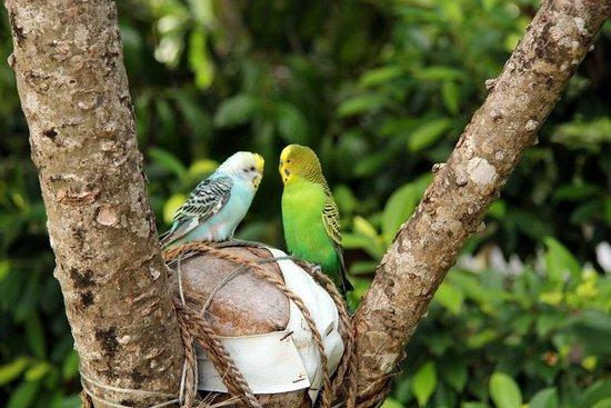 Thulhagiri Island Resort : Cute couple