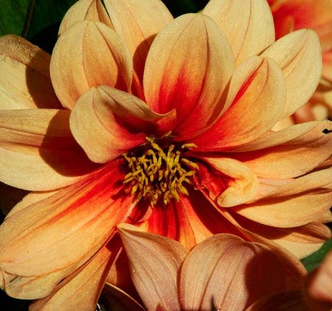 Annual Flower Trial Garden: Fort Collins Trial Gardens-July