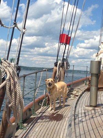 Tevake Sailing Charters: Casco