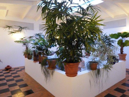 Hotel Horizontes de Montezuma: Treppenhaus