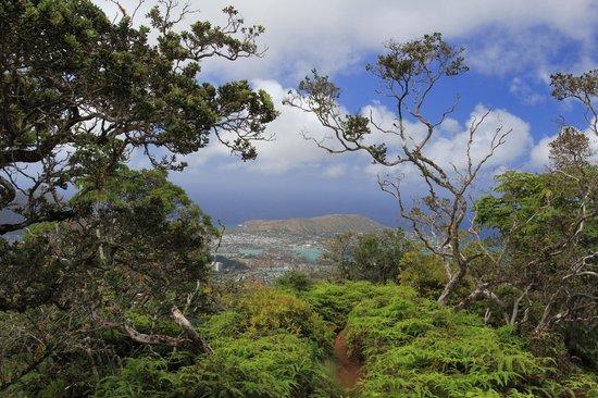 Kuliouou Ridge Hike: Near the top, looking north
