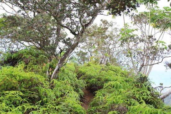 Kuliouou Ridge Hike: Green vegatation - nice change of scenery for me