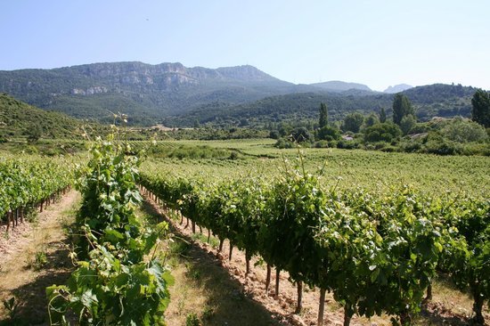Hospederia del Vino : The Vineyards of Bodegas Puelles