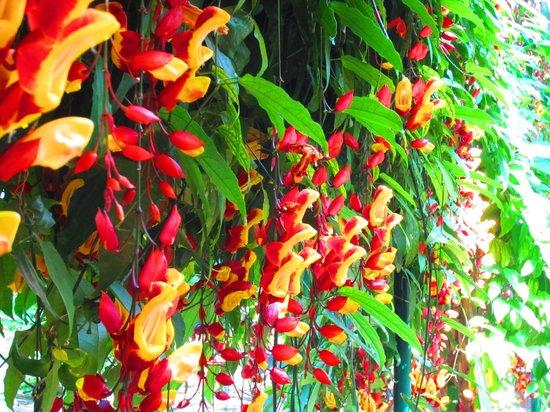 Quinta do Boa Vista: schöner Vorhang